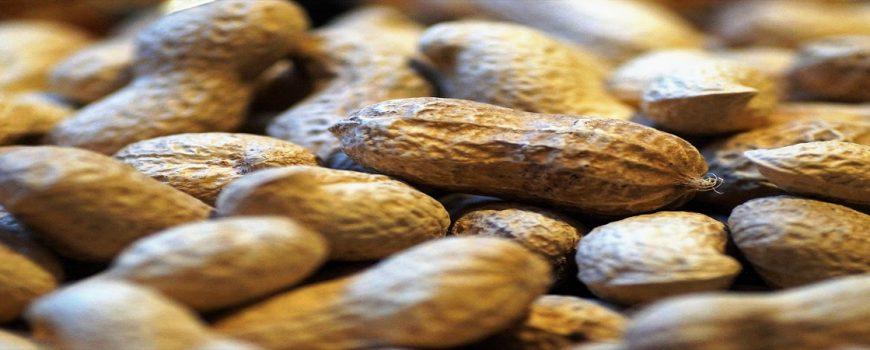 Hogyan kell tájékoztatni a vendégeket a felszolgált ételek allergén összetevőiről?